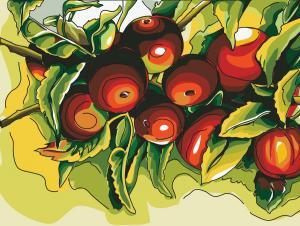 Apples Color Outline