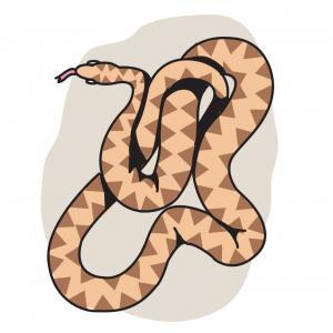 Snake Color Outline